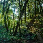 Rain Forest in Doi Inthanon, Chiang Mai, Thailand