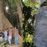 Community Forest in Tha Sae, Chumphon Province